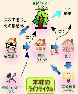 木材のライフサイクル